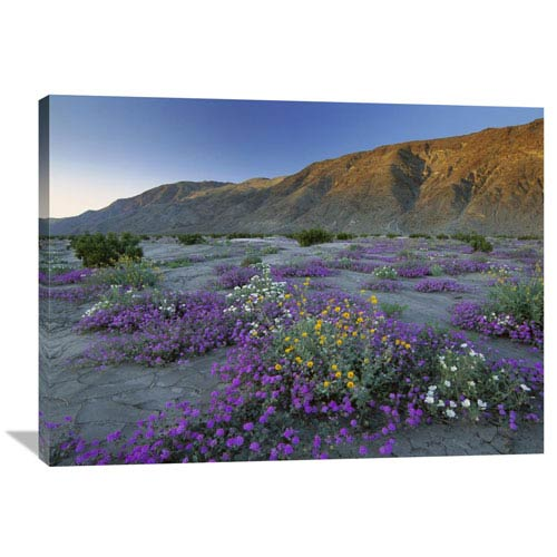 Global Gallery Sand Verbena And Desert Sunflowers Anza Borrego Desert State Park, California By Tim Fitzharris, 30 X 40-Inch