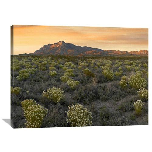 Global Gallery Pepperweed Meadow Beneath El Capitan, Guadalupe Mountains National Park, Texas By Tim Fitzharris, 30 X 40-Inch