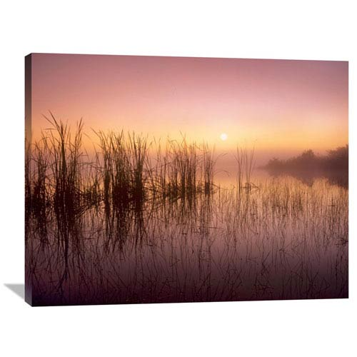 Global Gallery Reeds Reflected In Sweet Bay Pond At Sunrise, Everglades National Park, Florida By Tim Fitzharris, 30 X