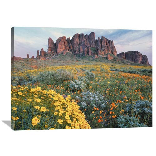 Global Gallery California Brittlebush Lost Dutchman State Park, Superstition Mountains, Arizona By Tim Fitzharris, 30 X