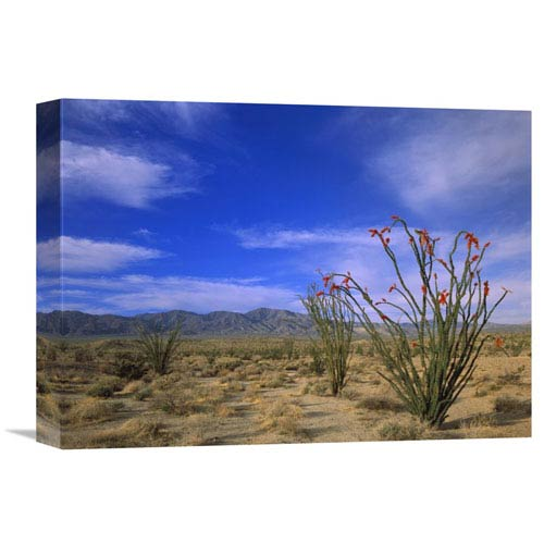Global Gallery Ocotillo And The Vallecito Mountains, Anza Borrego Desert State Park, California By Tim Fitzharris, 12 X