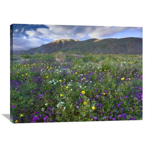 Global Gallery Wildflowers Carpeting The Ground Beneath Coyote Peak, Anza Borrego Desert, California By Tim Fitzharris, 30 X