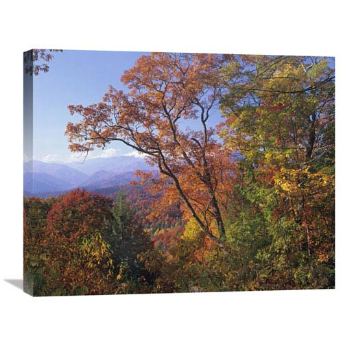 Global Gallery Deciduous Forest In Autumn, Blue Ridge Parkway, Great Smoky Mountains, North Carolina By Tim Fitzharris, 22 X