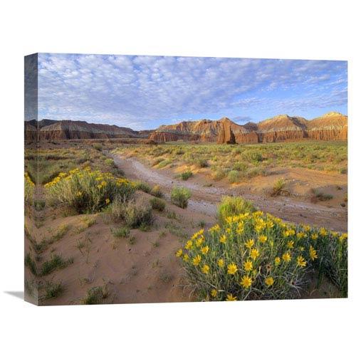 Global Gallery Wildflowers Growing Along Dirt Road, Temple Of The Moon, Capitol Reef National Park, Utah By Tim Fitzharris,