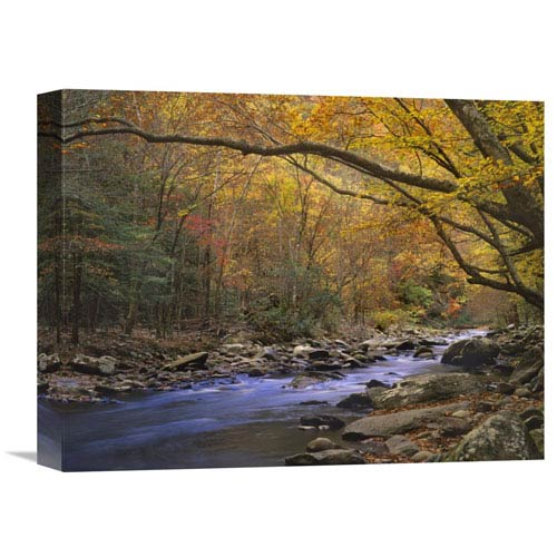 Global Gallery Little River Flowing Through Autumn Forest, Great Smoky Mountains National Park, Tennessee By Tim Fitzharris,