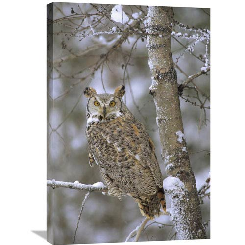 Global Gallery Great Horned Owl In Its Pale Form Perching In A Snow Covered Tree, British Columbia, Canada By Tim Fitzharris,