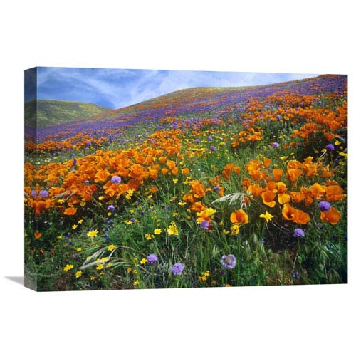Global Gallery California Poppy And Other Wildflowers Growing On Hillside, Spring, Antelope Valley, California By Tim