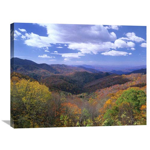 Global Gallery Deciduous Forest In The Autumn From Thunderstruck Ridge Overlook, Blue Ridge Parkway, North Carolina By Tim