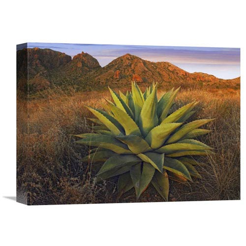 Global Gallery Agave Plants And Chisos Mountains Seen From Chisos Basin, Big Bend National Park, Chihuahuan Desert, Texas By