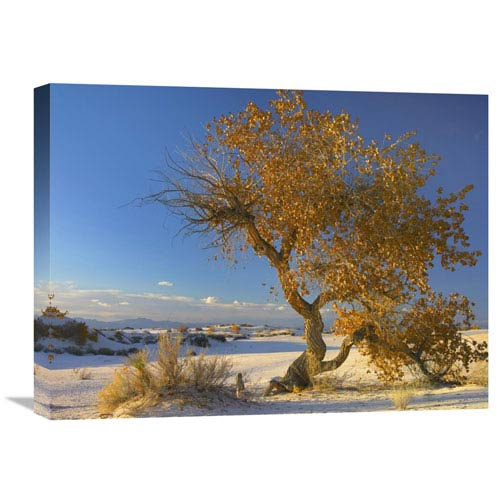 Global Gallery Fremont Cottonwood Tree Single Tree In Desert, White Sands National Monument, Chihuahuan Desert New Mexico By