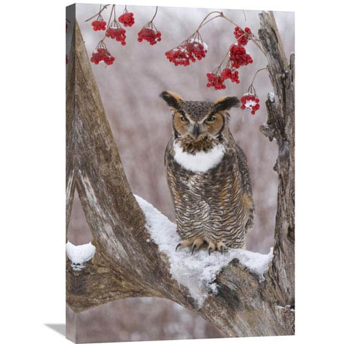 Global Gallery Great Horned Owl In Winter, Howell Nature Center, Michigan By Steve Gettle, 30 X 20-Inch Wall Art