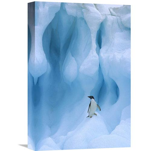 Global Gallery Adelie Penguin On Iceberg, South Shetland Islands, Antarctic Peninsula By Colin Monteath, 18 X 12-Inch Wall
