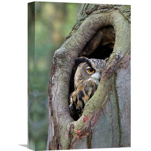 Global Gallery Eurasian Eagle Owl Looking Out From A Tree Cavity, Netherlands By Rob Reijnen, 18 X 12-Inch Wall Art
