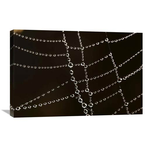 Global Gallery Spider Web With Beads Of Dew, France By Cyril Ruoso, 20 X 30-Inch Wall Art