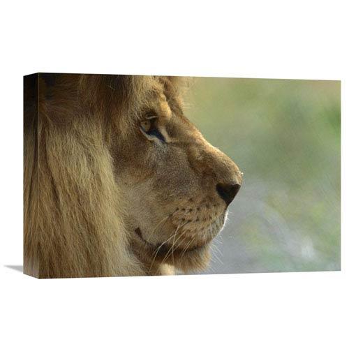 Global Gallery African Lion Male Portrait By San Diego Zoo, 12 X 18-Inch Wall Art