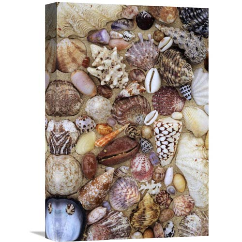 Global Gallery Various Conch, Cowry, Clam And Other Marine Shells By Rinie Van Meurs, 18 X 12-Inch Wall Art