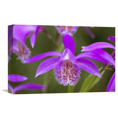 Global Gallery Orchid Flower By Visionspictures, 12 X 18-Inch Wall Art
