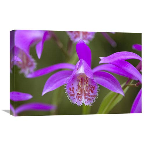 Global Gallery Orchid Flower By Visionspictures, 16 X 24-Inch Wall Art