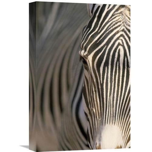 Global Gallery Grevys Zebra Close Up, Africa By Winfried Wisniewski, 18 X 12-Inch Wall Art