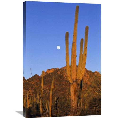 Global Gallery Saguaro Cactus In Desert Landscape, Sonoran Desert, Saguaro National Monument, Arizona By Konrad Wothe, 30 X