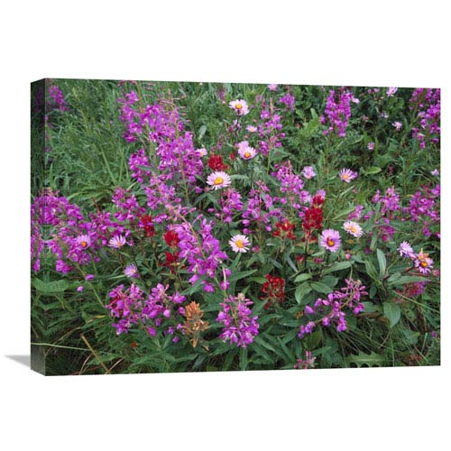 Global Gallery Fireweed Asters And Paintbrush , North America By Tim Fitzharris, 18 X 24-Inch Wall Art