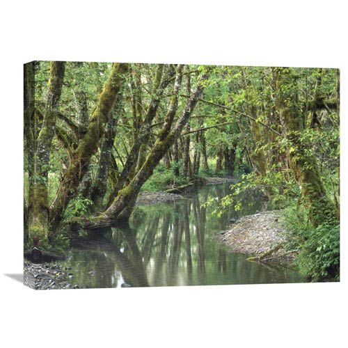 Global Gallery Red Alder Trees With Moss, Hoh Rainforest, Olympic Np, Washington By Tim Fitzharris, 18 X 24-Inch Wall Art