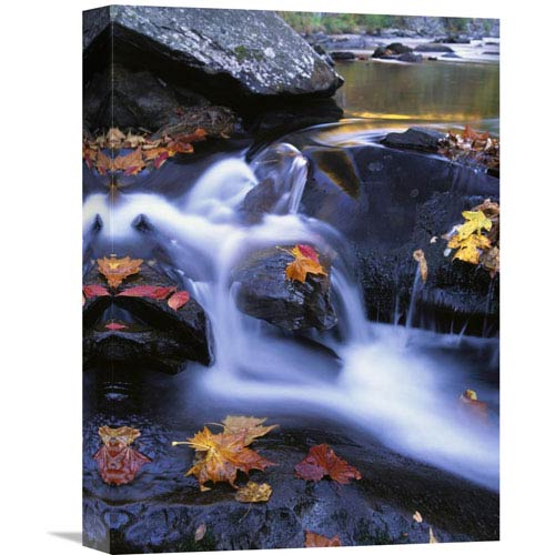 Global Gallery Autumn Leaves In Little River, Great Smoky Mountains Np Tennessee By Tim Fitzharris, 16 X 12-Inch Wall Art