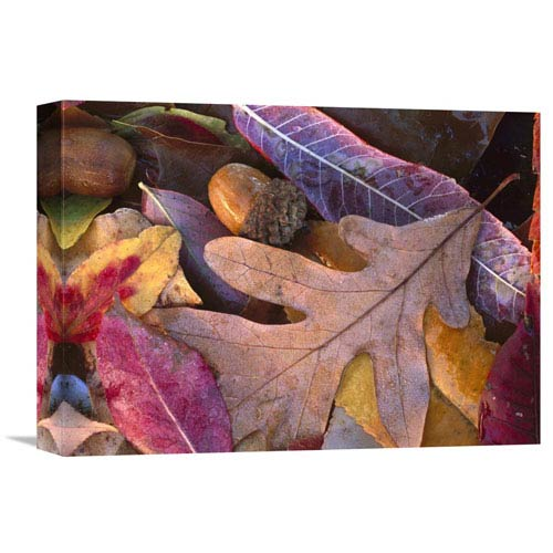 Global Gallery Acorns, Oak, Cherry And Sumac, Fall, Petit Jean State Park, Arkansas By Tim Fitzharris, 12 X 16-Inch Wall Art