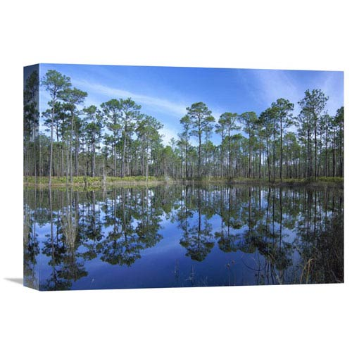 Global Gallery Pine Forest Mirrored In Reflection Pond, Ochlocknee River State Park, Florida By Tim Fitzharris, 12 X 16-Inch