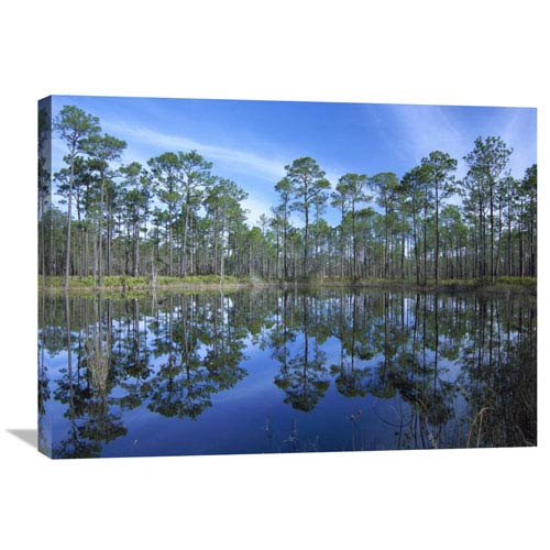 Global Gallery Pine Forest Mirrored In Reflection Pond, Ochlocknee River State Park, Florida By Tim Fitzharris, 24 X 32-Inch