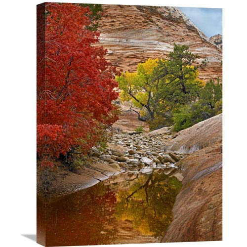 Global Gallery Maple And Cottonwood Autumn Foliage, Zion National Park, Utah By Tim Fitzharris, 24 X 18-Inch Wall Art