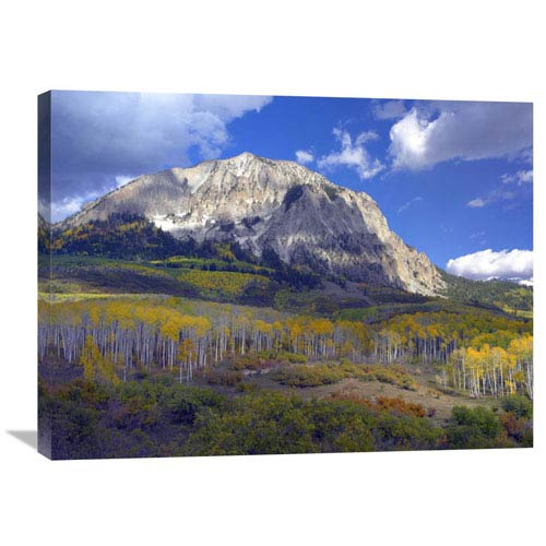 Global Gallery Fall Colors At Gunnison National Forest, Colorado By Tim Fitzharris, 24 X 32-Inch Wall Art
