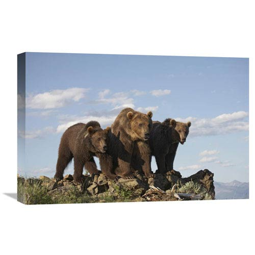 Global Gallery Grizzly Bear With Two One Year Old Cubs, North America By Tim Fitzharris, 16 X 24-Inch Wall Art