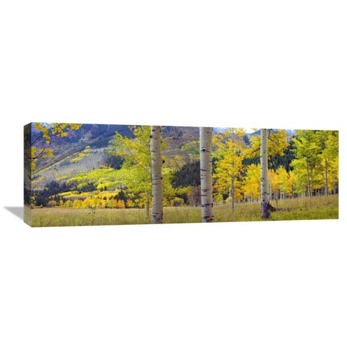 Global Gallery Quaking Aspen Grove In Autumn, Colorado By Tim Fitzharris, 12 X 36-Inch Wall Art