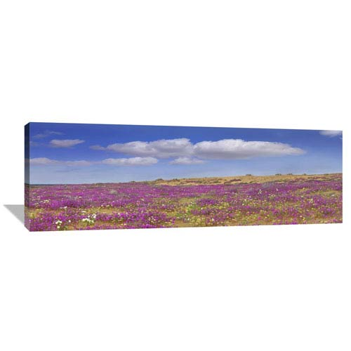 Global Gallery Sand Verbena Carpeting The Imperial Sand Dunes, California By Tim Fitzharris, 18 X 54-Inch Wall Art