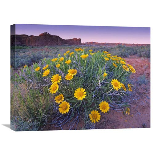 Global Gallery Sunflowers And Buttes, Capitol Reef National Park, Utah By Tim Fitzharris, 18 X 24-Inch Wall Art