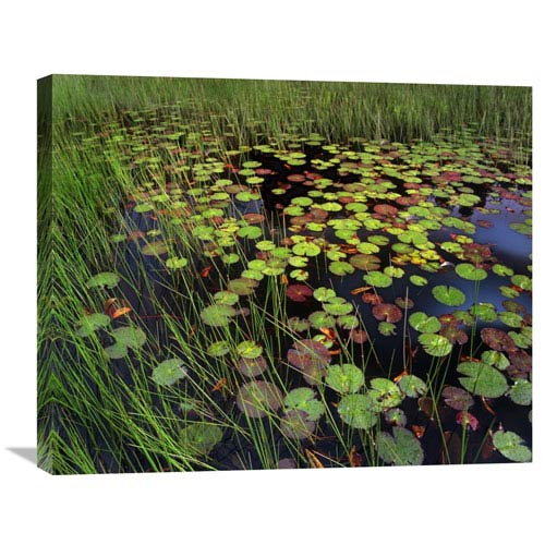 Global Gallery Pond With Lily Pads And Grasses, Cape Cod, Massachusetts By Tim Fitzharris, 22 X 28-Inch Wall Art