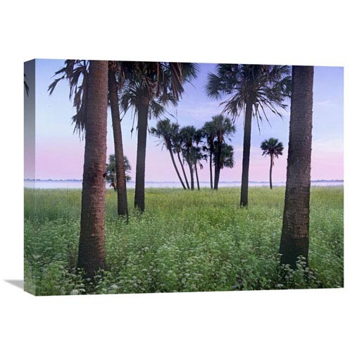 Global Gallery Cabbage Palm Meadow, Myakka River State Park, Florida By Tim Fitzharris, 18 X 24-Inch Wall Art