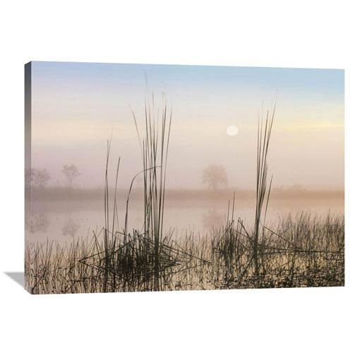 Global Gallery Reeds In Sweet Bay Pond, Everglades National Park, Florida By Tim Fitzharris, 30 X 40-Inch Wall Art