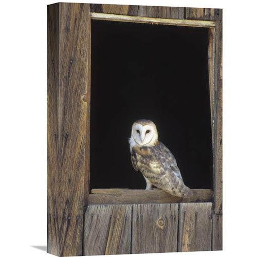 Global Gallery Barn Owl Perching On Barn Window, North America By Konrad Wothe, 18 X 12-Inch Wall Art