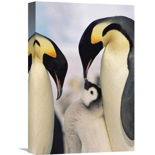Global Gallery Emperor Penguin Parents With Chick, Antarctica By Konrad Wothe, 18 X 12-Inch Wall Art