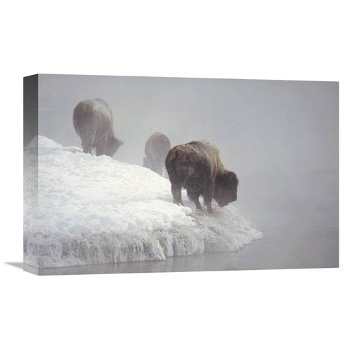 Global Gallery American Bison Along Snowy Riverbank, Yellowstone Np, Wyoming By Konrad Wothe, 12 X 18-Inch Wall Art