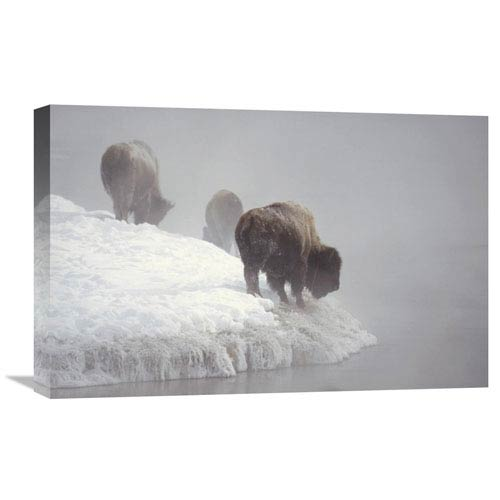Global Gallery American Bison Along Snowy Riverbank, Yellowstone Np, Wyoming By Konrad Wothe, 16 X 24-Inch Wall Art
