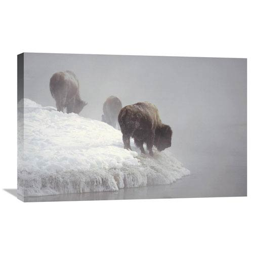 Global Gallery American Bison Along Snowy Riverbank, Yellowstone Np, Wyoming By Konrad Wothe, 20 X 30-Inch Wall Art