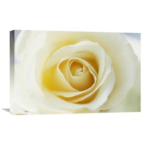 Global Gallery Rose Close Up Of White Rose In Bloom By Jan Vermeer, 16 X 24-Inch Wall Art