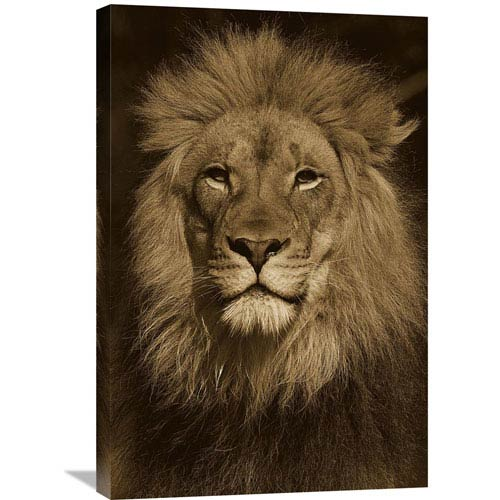 Global Gallery African Lion Male Portrait, Native To Africa By San Diego Zoo, 30 X 20-Inch Wall Art