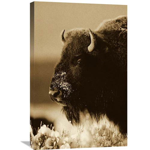 Global Gallery American Bison Portrait In Snow, North America By Tim Fitzharris, 30 X 20-Inch Wall Art