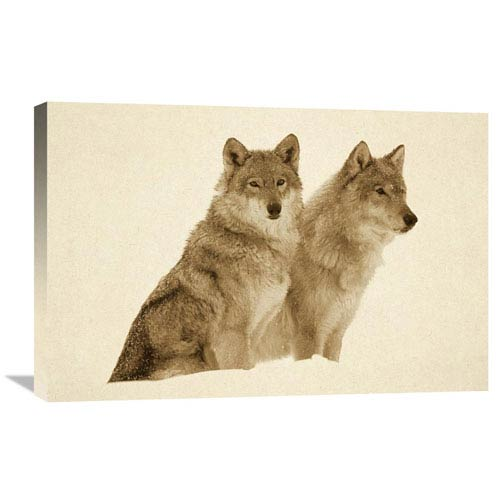 Global Gallery Timber Wolf Portrait Of Pair Sitting In Snow, North America By Tim Fitzharris, 20 X 30-Inch Wall Art