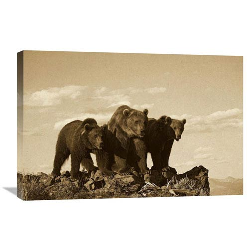 Global Gallery Grizzly Bear With Two One Year Old Cubs, North America By Tim Fitzharris, 20 X 30-Inch Wall Art