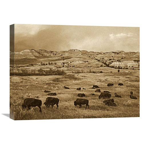 Global Gallery American Bison Herd Grazing On Praire, Theodore Roosevelt Np, North Dakota By Tim Fitzharris, 18 X 24-Inch